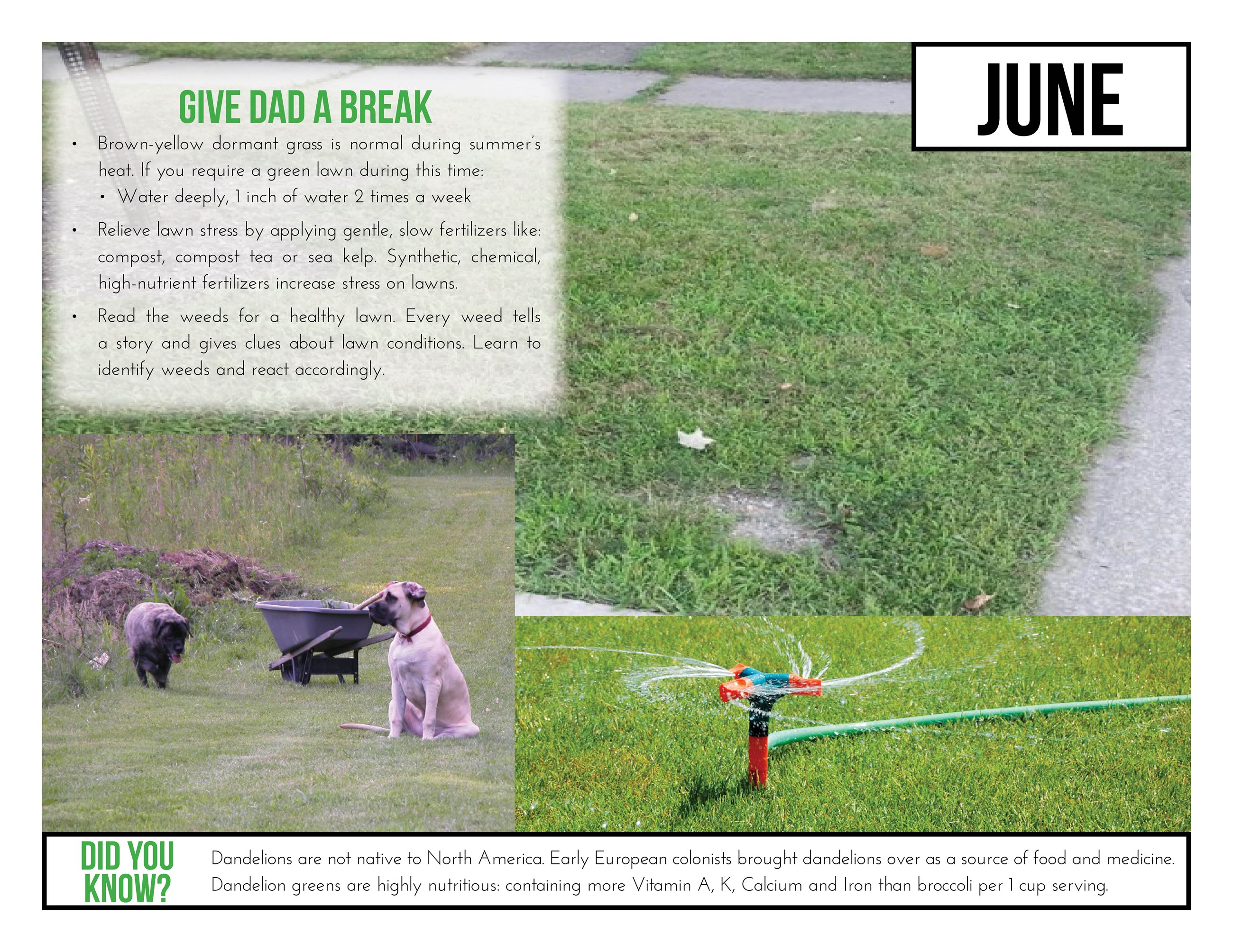 June Stormwater Tip  Photo shows two dogs and a wheelbarrow on a lawn.  Give Dad a Break  -Brown-yel